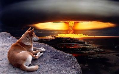 絶景を見下ろす犬11