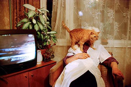 テレビを見るのを邪魔する猫15
