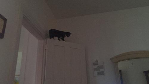 どこでも登れる猫04