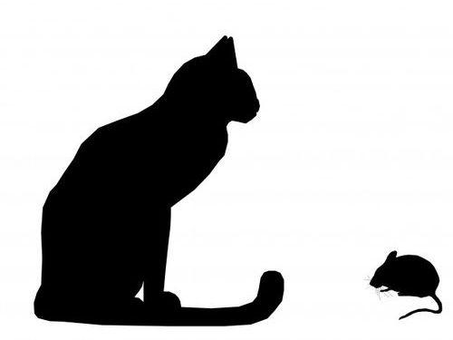 猫とネズミでも親友になれる00