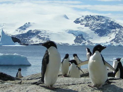 ペンギンひとり00