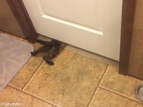 子猫がドアの下を通り抜ける04