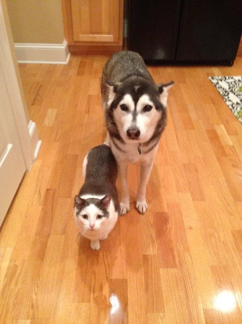 兄弟みたいな犬と猫01