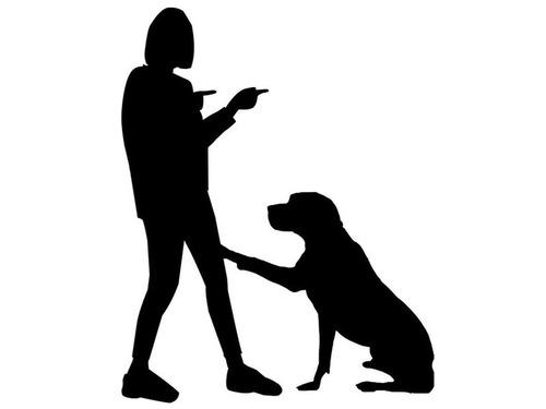 犬が家具をボロボロにしたけど、叱る気も失せるとき…