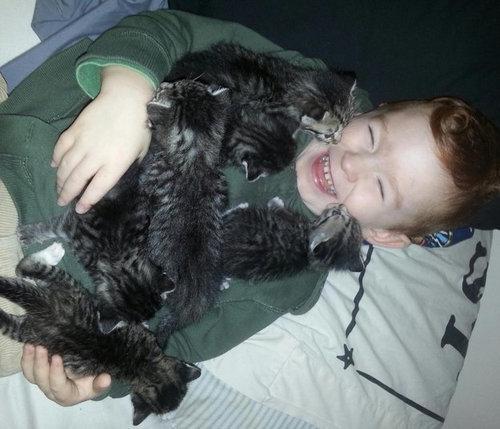猫をぎゅーっとしたくなる写真24
