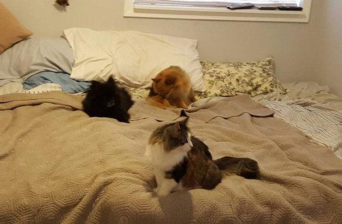 5匹の猫と2匹の犬06