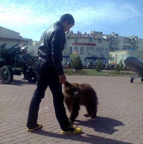 ロシアのクマ22