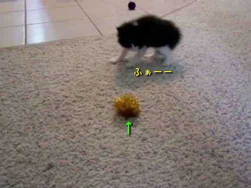 子猫とボール