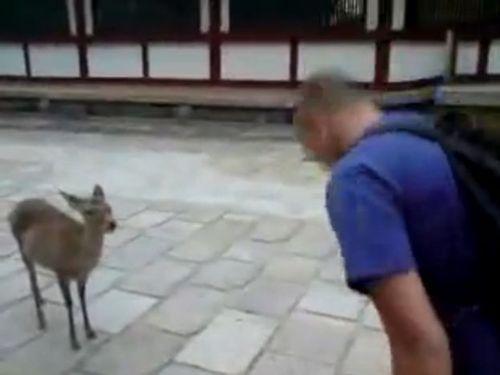 礼儀正しい鹿01