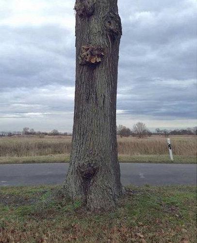 大木を宙に浮かべる方法01