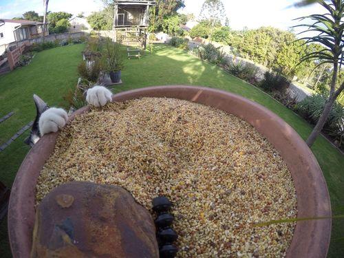 鳥のエサ箱にカメラを設置してみた01