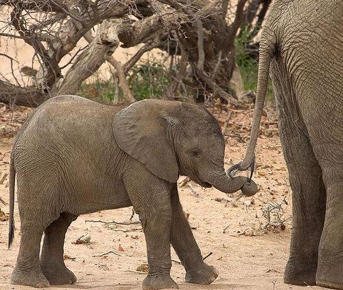 ゾウの尻尾05