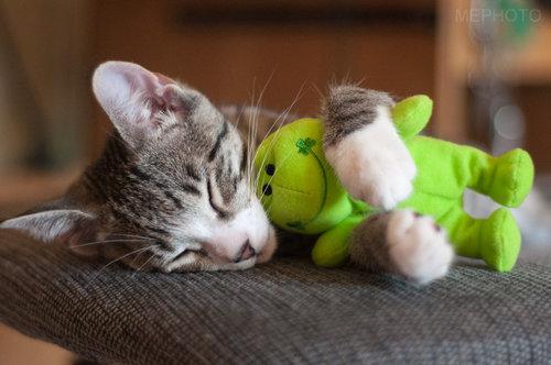 手をつないで寝る子猫たち04
