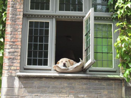 幸せそうな犬04