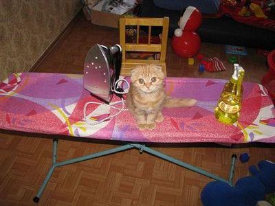 神出鬼没の猫09