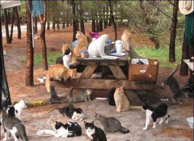猫の王国05
