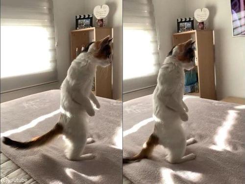 2本の足で立つ子猫02