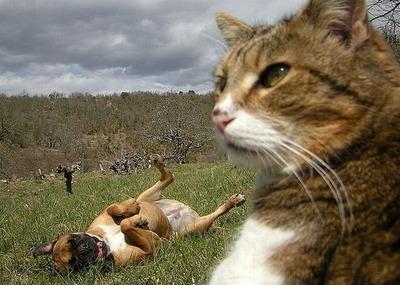 邪魔する犬と猫02
