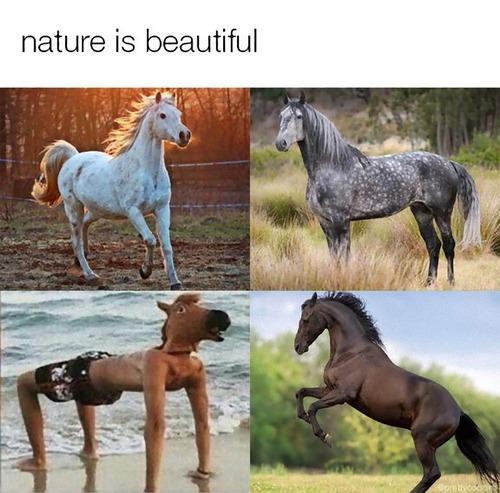 美しい4頭の馬01