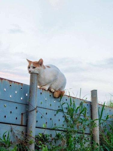 チャレンジャーな猫02