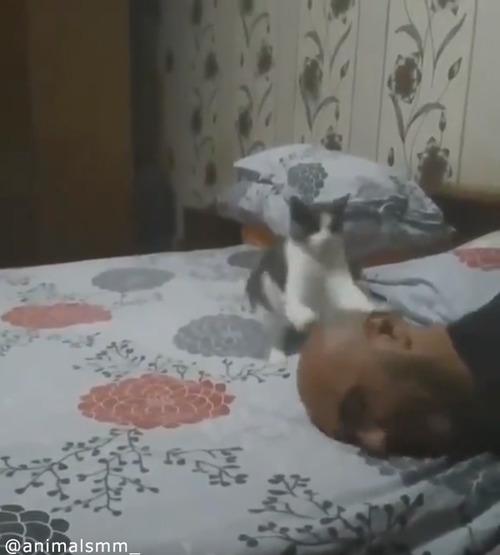 「遊んでニャ—」子猫の可愛すぎるアピール05