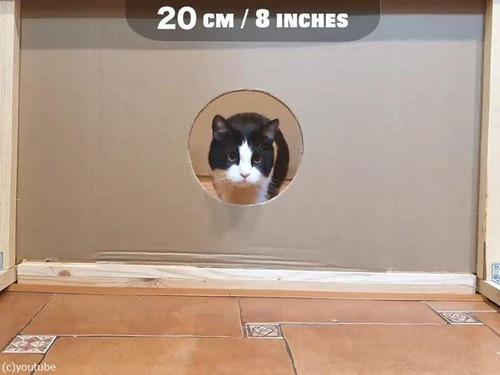 猫が通れる穴のサイズを実験00