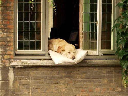 幸せそうな犬02