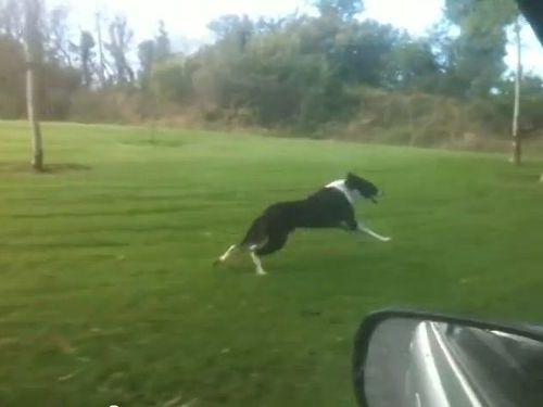 興奮する犬01