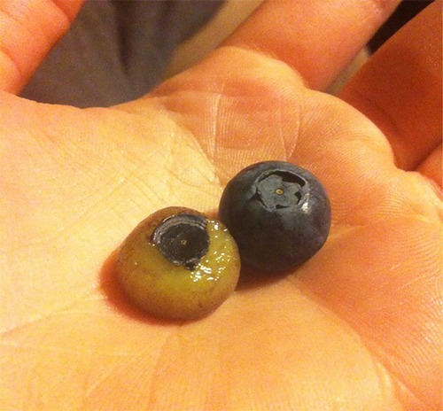 皮をむいた果物08