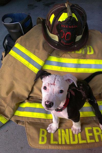 火災から救出された子犬、消防士に07