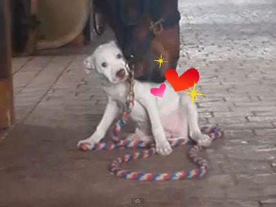 馬と犬の愛情