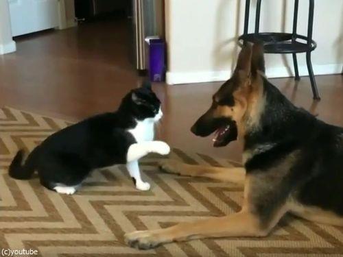 猫と犬がケンカしてると思ったら…結末にほっこり03