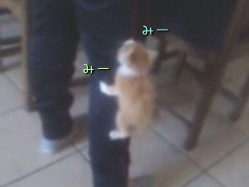 子猫がよじ登ってくる00