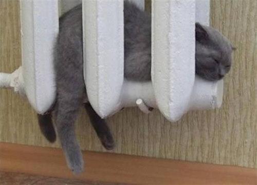 ぬくぬくする猫たち09