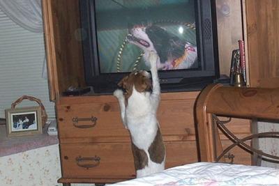 猫の番組を見つめる猫15