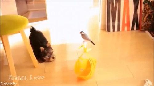 鳥と犬の友情01