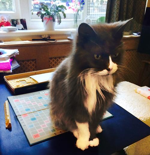 猫が飼い主を求めて施設まで05