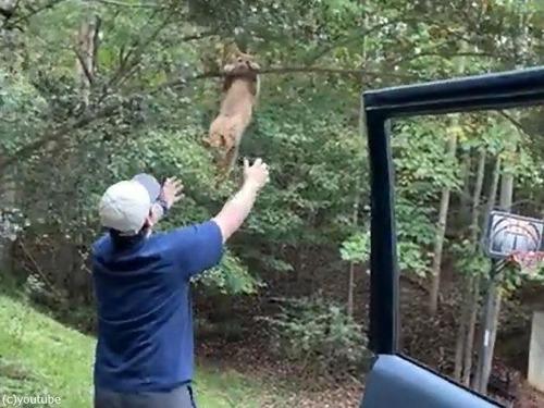 木から落ちそうな猫00