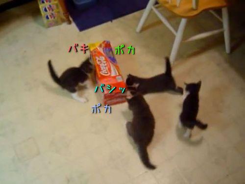 箱と子猫の戦い00