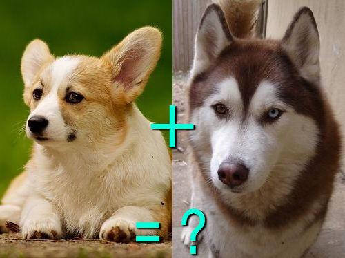 犬の混血A 15