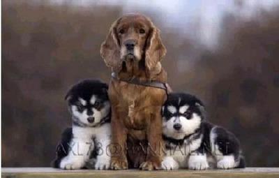 3匹の犬の成長01