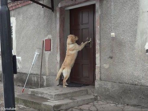 家に入りたい犬02