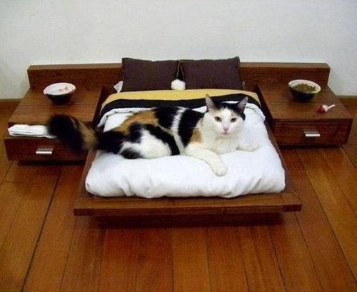 猫の家具04