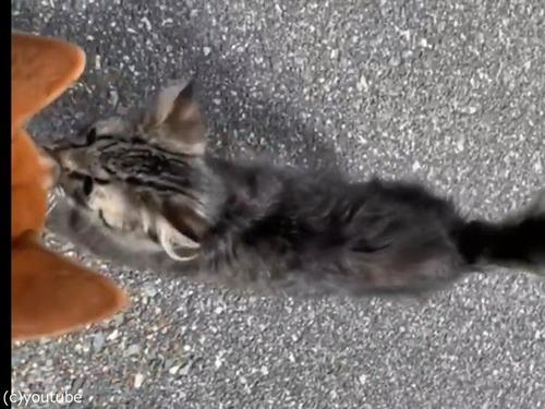 犬と散歩中に子猫が近づいてきた00