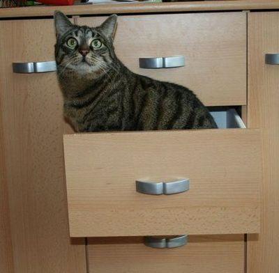 狭い所に入りたがる猫15