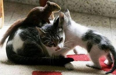 リスと猫02