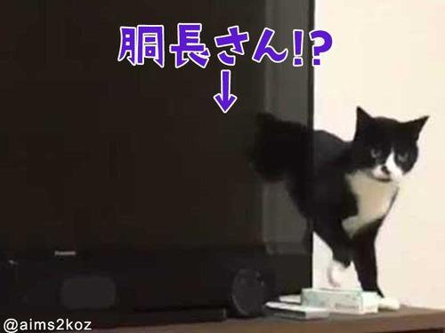胴体が長すぎる猫00