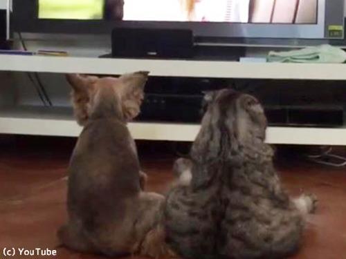 仲良くテレビを観るワンニャン00