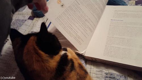 本のページをめくらせない猫01