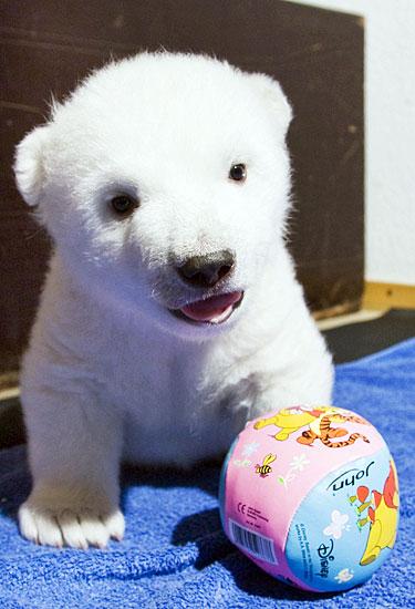 白クマの子供がかわいすぎる16